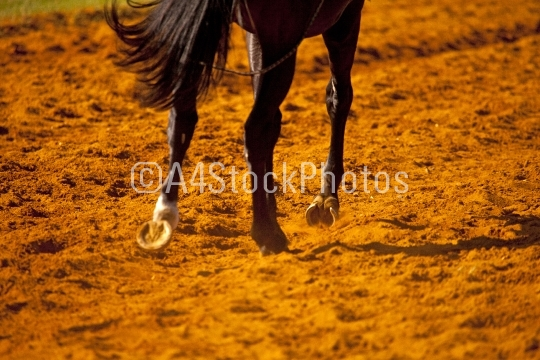 Racehorse hooves in red sand